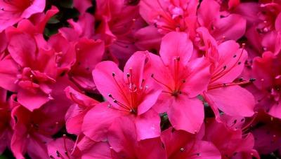 flowers-3217208_960_720.jpg