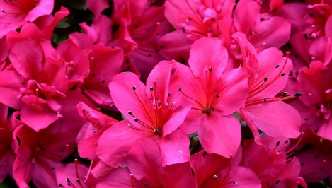 flowers-3217208_960_720