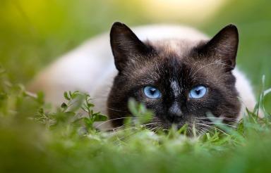 cat-2529563_960_720