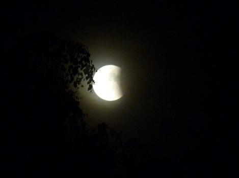 lunar-eclipse-599114_960_720.jpg